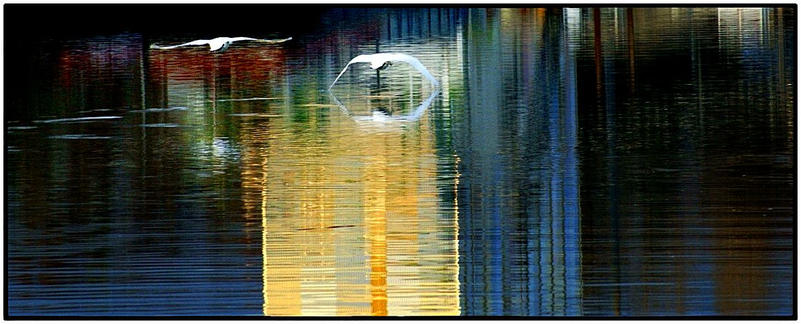 swan-lake-2
